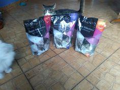 Retro  Koty i Pies: Żwirek jakiego jeszcze nie było