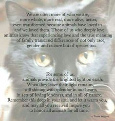 Pet Loss Grief by Teresa Wagner Cat Quotes, Animal Quotes, Crazy Cat Lady, Crazy Cats, I Love Cats, Cute Cats, Kittens Cutest, Pet Poems, Pet Loss Grief