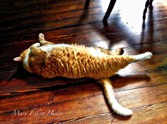 Relaxa Cat I