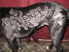 -Repinned- Beautiful creative dog grooming.