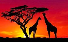 Trees landscape animals sunset nature silhouette clouds giraffes wildlife a African Animals, African Art, African Safari, African Culture, Foto Poster, Sunset Wallpaper, Sky Photos, Tier Fotos