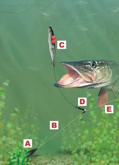 The rig when legering for pike or zander! It's easy to create, it's easy to cast, it's virtaully tange-free and it provides absolutely excellent bite registration. Pike Fishing Tips, Fishing Rigs, Walleye Fishing, Fishing Knots, Fishing Guide, Sport Fishing, Gone Fishing, Best Fishing, Fishing Tackle