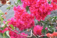 Postcard from Lanzarote Sangria Recipes, Plants, Travel, Food, Lanzarote, Viajes, Essen, Destinations, Meals