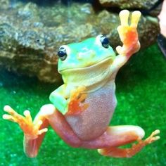 Peaceful frog - Nat Geo Snap   National Geographic Channel