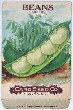 BEANS, Pole Lima, Antique Seed Packet, older