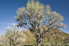 Fascinating Ways People Try to Leave Their Mark on the World | The Shoe Tree. Highway 50, Nevada. | Credit: Photo by: David Gardner | From Wired.com