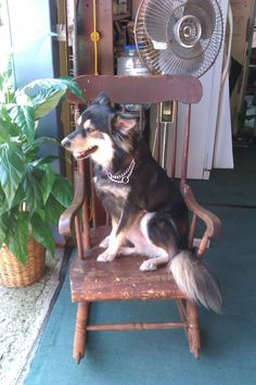 Scranberry Coop Antiques & More in Andover NJ is the only place where you can see Joey! Come on in, bring your dog, come find your treasure at The Coop!