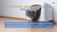 Tuna Bites Homemade Cat Treat Recipe for Sensitive Stomach - CatVills Tuna Cat Treat Recipe, Salmon Cat, Flat Faced Cat, Cat Diet, Canned Cat Food, Cat With Blue Eyes, Cat Trees, Cat Condo, Rare Animals