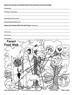 Deciduous Forest Food Web Activity
