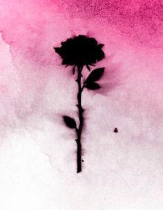 Pink n black rose