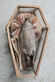 Ohmisterfinch: Textile Dead Bird In Glass Coffin By Mister...