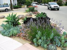 Shade Garden Flowers And Decor Ideas Agave Drago Agave Attenuata E Outras Suculentas Agave Attenuata, Succulent Landscaping, Landscaping Plants, Front Yard Landscaping, Landscaping Ideas, Low Maintenance Landscaping, Low Maintenance Garden, Types Of Succulents, Succulents Garden