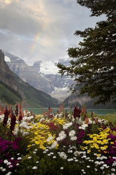 Wildflowers, Banff National Park, Canada.