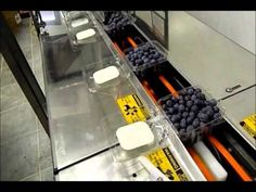 Packaging Blueberries at Happy Acres Farm 2014 Food Technology, Technical Innovation, Blueberries, Agriculture, Farms, Acre, Packaging, Happy, Youtube