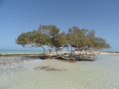 Mangrove Beach, Marsa Alam, Egypt