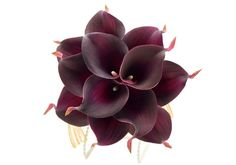 Stemple's One Dozen Plum Real Touch Artificial Calla Lilies