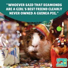 Honestly, though...💜 Guniea Pig, Cute Piggies, Strange Photos, Diamond Are A Girls Best Friend, Pigs, Best Friends, Cute Animals, Tulle, Beat Friends