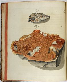 Wulfen, Franz Xavier(1785) Mineralogy, Antique Illustration, History Museum, Beetles, Raw Materials, Rocks And Minerals, Natural History, Fossils, Mysterious