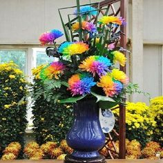 Garden Supplies Free Shipping 20 Rainbow Chrysanthemum Flower Seeds rare color ,new arrival DIY Home Garden flower plant