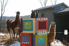 """A lovely llama quilt (with llamas!) -- """"I was so excited when Laurie Wisbrun sent me some of her new Llook! Llamas! fabrics she self-produces and prints through Spoonflower – I think the llamas are absolutely adorable and the coordinating prints are a perfect complement. . . I went with some solids and prints in some punchy and vibrant colors and made up some simple blocks . . . Luckily we were able to find these  friendly and curious llamas not too far from our house."""""""