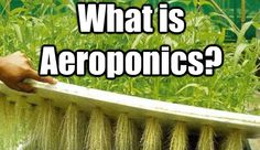 https://www.facebook.com/pages/Hydro-Ponics-of-Lehigh-Valley/597971890219150 What is Aeroponics?