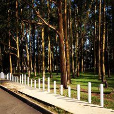 Parque de la Sabana