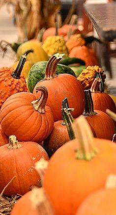 ♥  pumpkins... #ADKAutumn