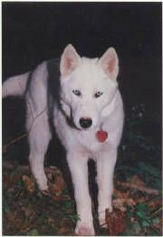 Physical Differences Between Wolves and Dogs?