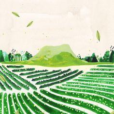 오설록과 함께 작업한 <아이스 블랜딩 티> 패키지 일러스트 작업할때 잠못자서 고생했었는데 제품으로 나오니 너무 반갑다T_T 이번에 제주도 가면 오설록 가야쥐❕#오설록 Art And Illustration, Landscape Illustration, Illustrations And Posters, Tea Art, Watercolor Sketch, Japanese Art, Scenery, Drawings, Artwork