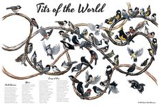 Tits of the World Art Print