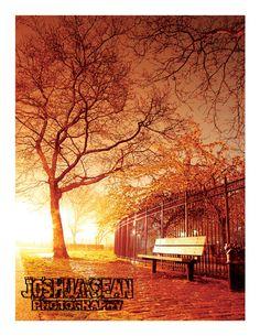 Bay Ridge. Brooklyn. New York City. Park. Night. Fog. Fall. Autumn. Park Bench. Joshua Sean Photography.