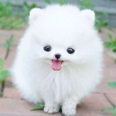 i have no idea if this dog is real but it is just toooo cute lol