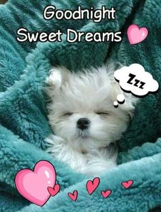 50 best good night quotes and sayings so cute good night quo Good Night Funny, Good Night Friends, Good Night Gif, Good Night Wishes, Good Night Sweet Dreams, Good Night Beautiful, Images For Good Night, Best Good Night Messages, Funny Good Morning Quotes