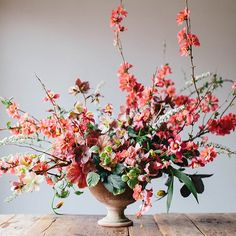 I came really close to buying myself a bunch of quince bushes at the nursery today, because really, nothing is as happy as this bright coral color in the early spring when everything else is still just sticks. One more from the spring flower post for @snippetandink, photo from @kateosborne