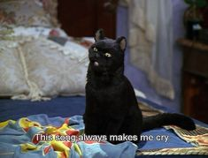 Salem Sabrina, Sabrina Cat, Cat Memes, Funny Memes, Hilarious, Funny Quotes, Reaction Pictures, Funny Pictures, Salem Cat