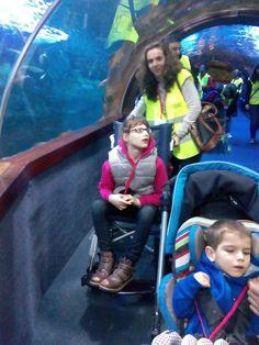 Visita guiada al Aquarium de Larrialdiak Fundazioa con Pausoka Elkartea el 21 de febrero de 2015 https://www.larrialdiak.es/blog/visita-al-aquarium-de-larrialdiakfundazioa-con-pausoka-elkartea/