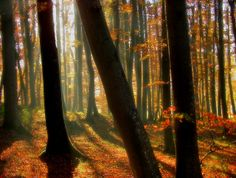 All sizes | light mist in an autumn forest | Flickr - Photo Sharing!