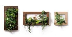 壁に緑を沢山飾って素敵な空間を作りたい!ウォールグリーンはそんな願いを叶えてくれます。そこで今回はDIYで簡単にできるウォールグリーンの作り方をご紹介します。 Plant Wall, Flower Art, Floating Shelves, Planter Pots, Wall Planters, Diy And Crafts, Home And Garden, Display, Green