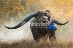 Stock Photo : Portrait of beautiful young woman playing with buffalo outdoor