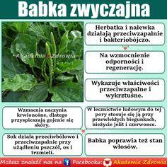 babka zwyczajna - korzyści zdrowotne - Zdrowe poradniki Natural Treatments, Natural Remedies, Naturopathy, Health And Beauty, Herbs, Training, Film, Nature, Kitchens