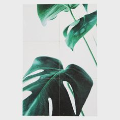 6 tiles = 1 Monstera. New digital printed tiles from Le Square   #welovetiles #newcollection #plants #monstera #tiles #digitalprinted #tileaddiction #tilecrush #art #krea #lifestyle #homedesign #fliser #boligindretning #boliginspiration #planter #copenhagen #lesquare #lesquarecph by lesquarecph