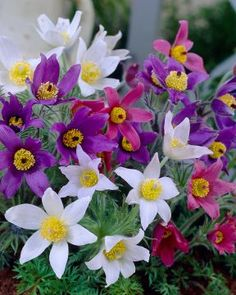 Great prices on your favourite Gardening brands, and free delivery on eligible orders. Thing 1, Garden Plants, Perennials, Plugs, Heavenly, Garden Ideas, Articles, Outdoors, Amazon