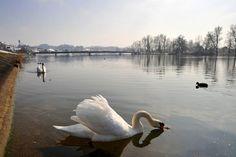 Klingnau (Suiza). Una serena mañana en el río Aare. Suiza | Flickr: Intercambio de fotos
