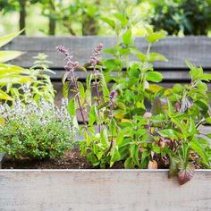 Everyone loves fresh herbs in recipes! Try growing your own lovely little DIY herb garden, using one of these great ideas from @passthepistil. Unexpected containers make surprisingly great herb garden solutions: try a wine box, a vintage wash tub, a strawberry pot, and more for beautifully fragrant and flavorful herbs.