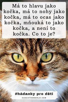 Má to hlavu jako kočka, má to nohy jako kočka, má to ocas jako kočka, mňouká to jako kočka, a není to kočka. Co to je_ Hádanky pro děti Preschool Crafts, Kids And Parenting, Language, Classroom, Cats, Fun, Animals, Class Room, Gatos