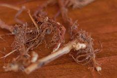 Koivukumpu: Rohtosuopayrtti pesuaineena