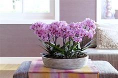 This is what makes your floral design outstanding ©Anthura #phalaenopsis #Santiago #pink