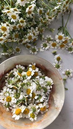 Chamomile Flowers – Best Home Plants Cocktail Videos, Flower Video, Moon Garden, Flower Aesthetic, Orchid Care, Aesthetic Videos, Outdoor Photography, Photography 101, Garden Planning