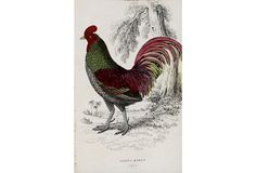 Pink & Green Rooster, 1843 - Shop Now on our Campbell's Melange Page on One Kings Lane!  We have a variety of paintings & prints available for purchase for any type of collection or piece for your home!