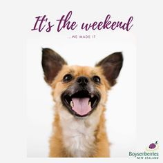 What does everyone have planned for the weekend? How To Plan, How To Make, New Zealand, Corgi, Movie Posters, Animals, Corgis, Animales, Film Poster